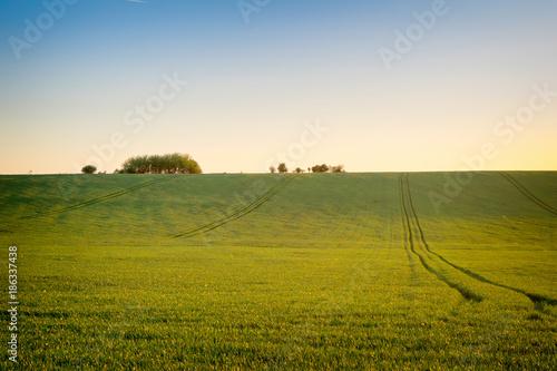 Keuken foto achterwand Beige Agriculture field