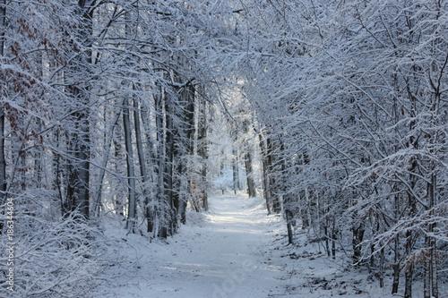 forêt en hiver - 186344604