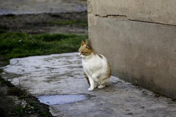 Abandoned street cats
