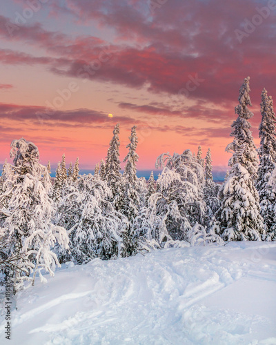 Foto op Aluminium Zalm winter in Åre Sweden