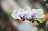 Orchidée au coeur violet
