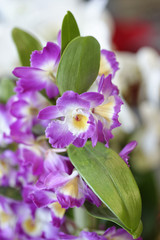 Close-up of beautiful vibrant purple orchid