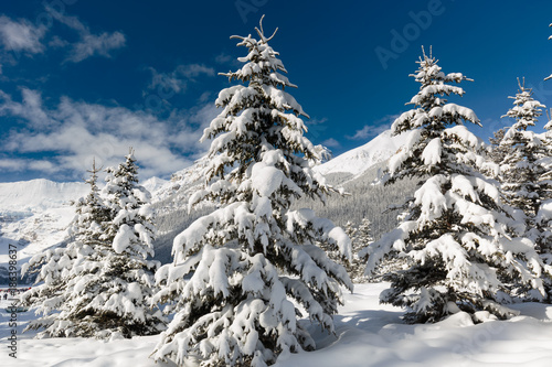Foto op Aluminium Canada Winter wonderland