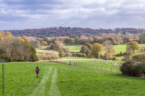 a person walking through English countryside during autumn with trees and grass on a sunny day