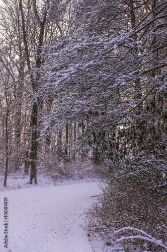 Papiers peints Lilas Beautiful portrait view of winter forest scene. Gladstone, New Jersey