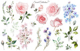 Set watercolor elements of rose, collection garden and wild flowers, leaves, branches, illustration isolated on white background, eucalyptus, bud - 186428229