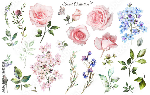 Set watercolor elements of rose, collection garden and wild flowers, leaves, branches, illustration isolated on white background, eucalyptus, bud
