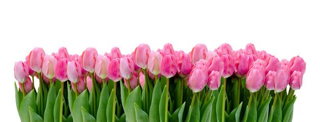 Reihe von Tulpen auf Weiß