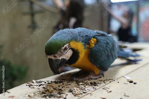 Aluminium Papegaai papuga