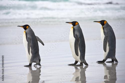 Aluminium Pinguin King Penguins - Falkland Islands