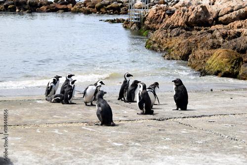 Aluminium Pinguin 2015-10 Südafrika