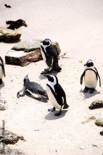 Fotobehang Pinguin 2015-10 Südafrika
