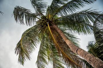 palm tree to the sky