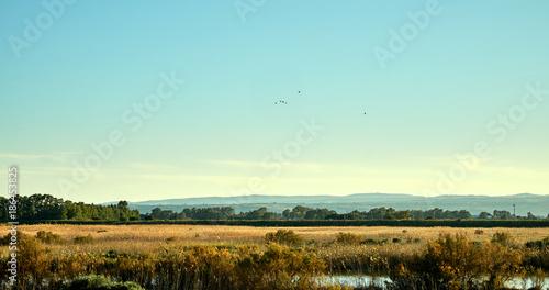 Foto op Aluminium Pool Paesaggio con fiume e uccelli migratori
