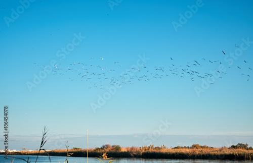 Fotobehang Pool Uccelli migratori volano su fiume in Sicilia