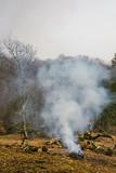 brûler/nettoyage terrain - 186458895