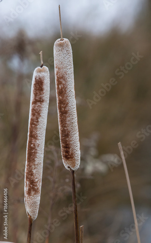 Foto op Canvas Natuur frozen reed details in winter at the lake