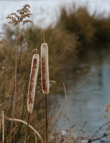Foto op Canvas Natuur reed details in winter at the lake