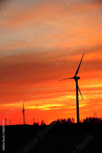 Poster Oranje eclat Wind turbines in the evening