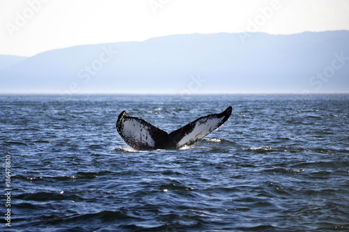 A Whale Tail Poster