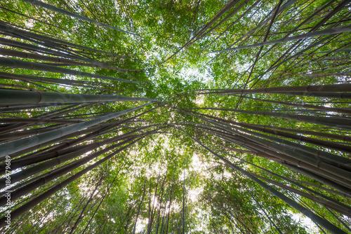 Aluminium Bamboe Bamboo forest vertical angle view in Chengdu, China