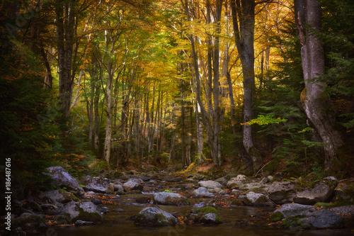Papiers peints Rivière de la forêt Shady forest