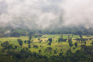 Jungle in Sri Lanka. Tropical rainforest with fog and clouds.