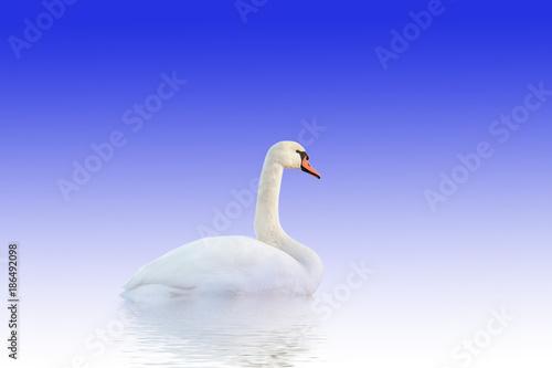 Fotobehang Zwaan Swan on white-blue surface.