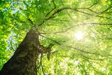 Forest Sunlight - 186499220