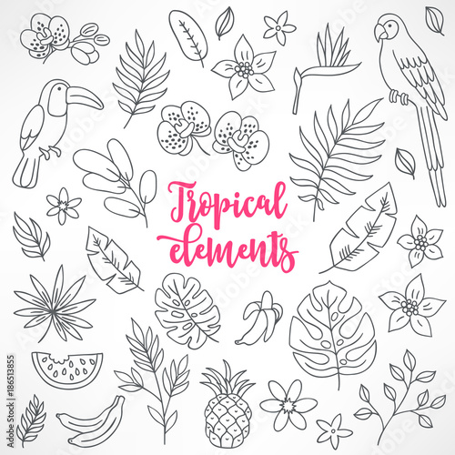 Set of contour tropical elements. Toucan, macaw, bamboo, pineapple, orchid
