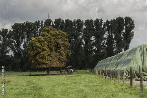 Foto op Canvas Grijze traf. Feld mit Pferden