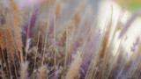 blurred Soft abstract background. - 186526270