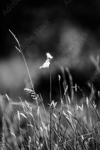 gorski-kwiat
