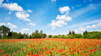 Poppy meadow with the blue sky