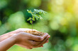 Leinwanddruck Bild - In the hands of trees growing seedlings. Bokeh green Background Female hand holding tree on nature field grass Forest conservation concept