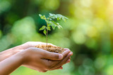 In the hands of trees growing seedlings. Bokeh green Background Female hand holding tree on nature field grass Forest conservation concept - 186547030