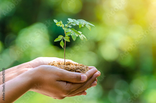 Leinwanddruck Bild In the hands of trees growing seedlings. Bokeh green Background Female hand holding tree on nature field grass Forest conservation concept