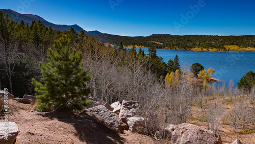 Foto op Aluminium Zalm Trees Lake Sky