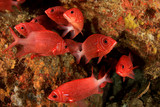 Coral reef and fish underwater - 186604817