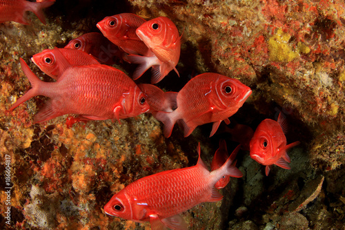 Coral reef and fish underwater Poster