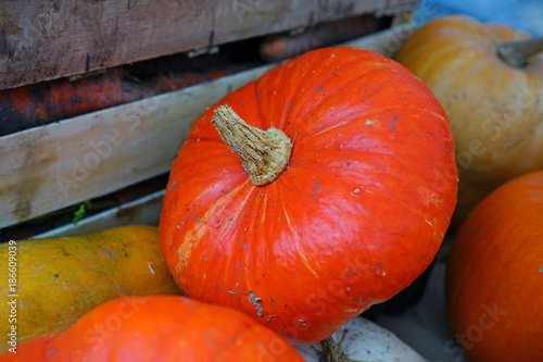 Colorful orange squash and pumpkins at a farmers market - 186609039
