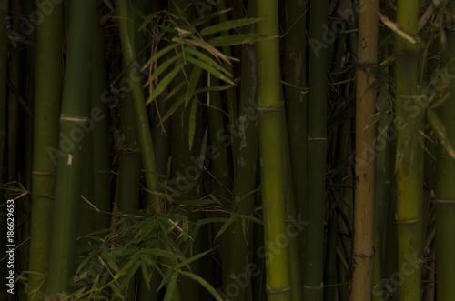 Aluminium Bamboe Bamboo Wallpaper Stock Images