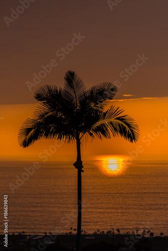 Aluminium Strand Palm Tree in Cloudy Sunset