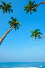 Idylic ocean beach with hanging palm trees at tropical island