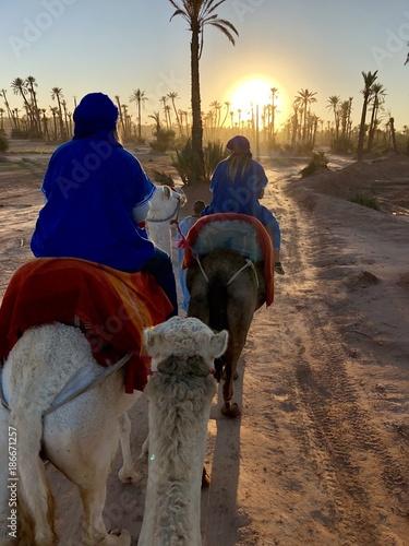 Fotobehang Kameel Camel Experience Marrakech