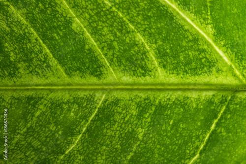 Macro green foliage background - 186674456