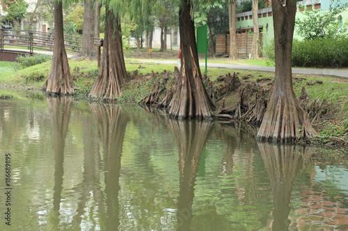 Fotobehang Olijf 公園の池と樹