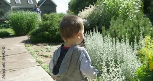 Toddler boy explores flower garden in summer - warm light and lens flares