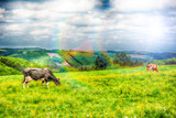 Agricultural landscape with herd of cows. Agricultural background