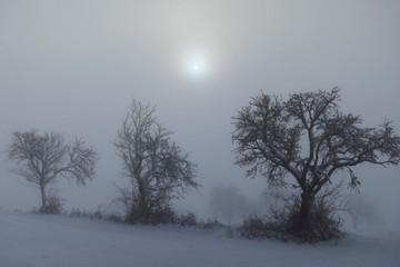 Nebel und Sonnenaufgang